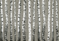 Fototapeta Junior 105 – brzózki szare, drzewa popart