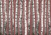 Fototapeta Marsala m12 - brzózki, drzewa, natura