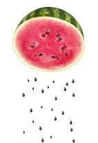 Fototapeta do kuchni 109 - arbuzy, pestki, owoce, cytrusy