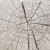 Fototapeta do kuchni 3 - sęki drewna, słoje drewna, naturalne, pnie