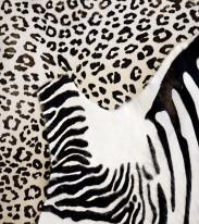 Fototapeta do kuchni 50 - zebra, skóra naturalna,