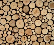 Fototapeta do kuchni 69 - drewno, paliki, pieńki, naturalne, słoje, tekstura drewna
