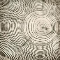 Fototapeta do kuchni 71 - drewno, sęki, słoje drewniane