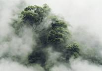 tropical forest in Japan, vintage filter image